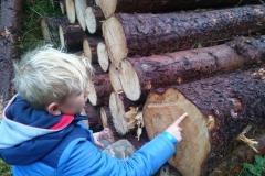 dzieci w lesie irlandia